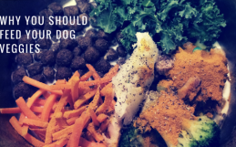 Why You Should Feed Your Dog Veggies
