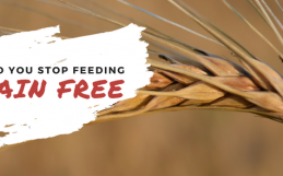 Should You STOP Feeding Grain Free?