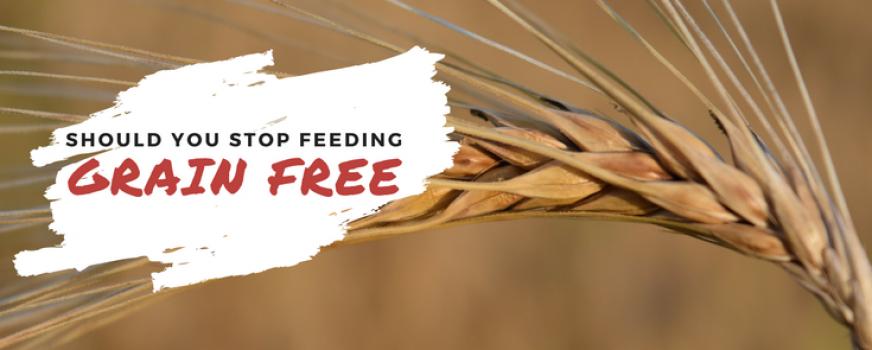 Should You STOP Feeding Grain Free?